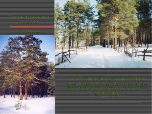 Многие хвойные леса являются искусственными. Они были заложены с конца XVIII
