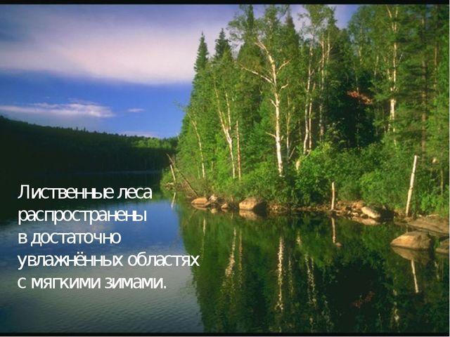 Лиственные леса распространены в достаточно увлажнённых областях с мягкими зи...