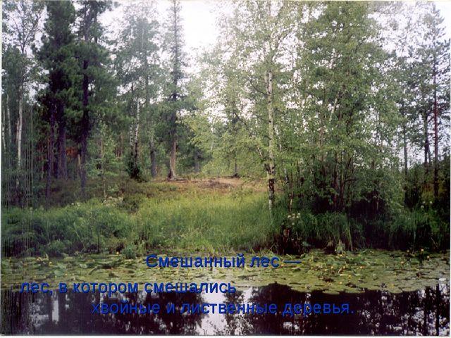 Смешанный лес— лес, в котором смешались хвойные и лиственные деревья.