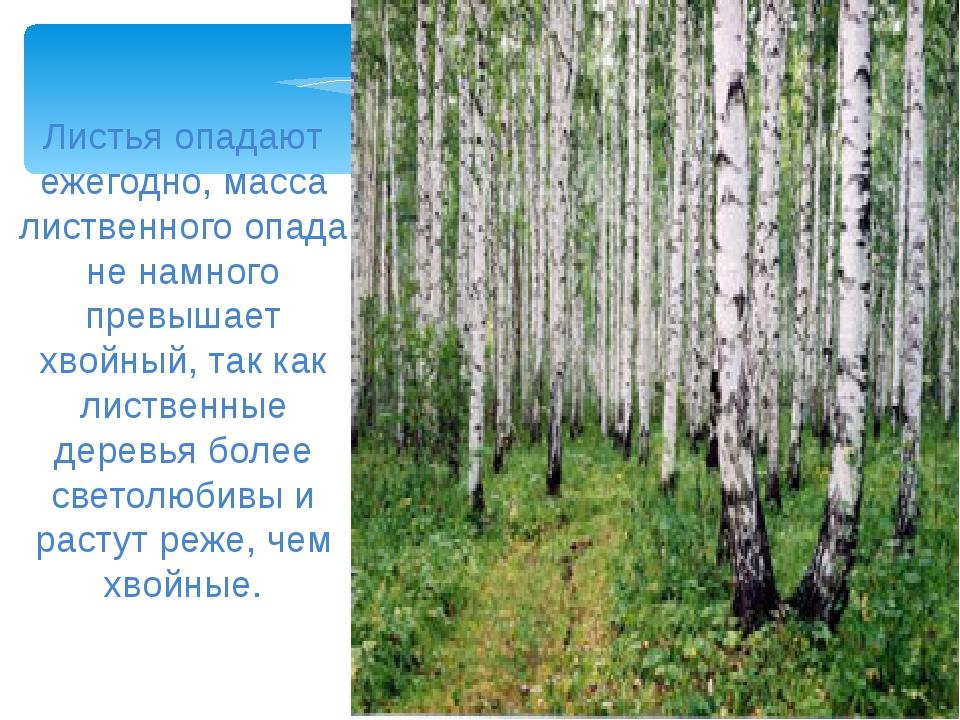Листья опадают ежегодно, масса лиственного опада не намного превышает хвойный...