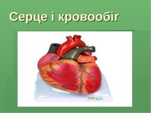 Серце і кровообіг