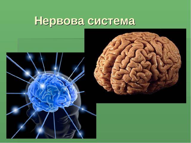 Нервова система