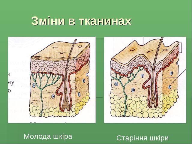 Зміни в тканинах Молода шкіра Старіння шкіри