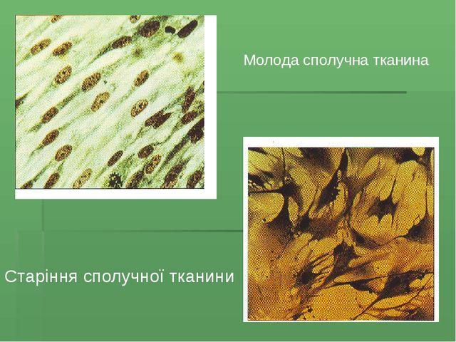 Молода сполучна тканина Старіння сполучної тканини