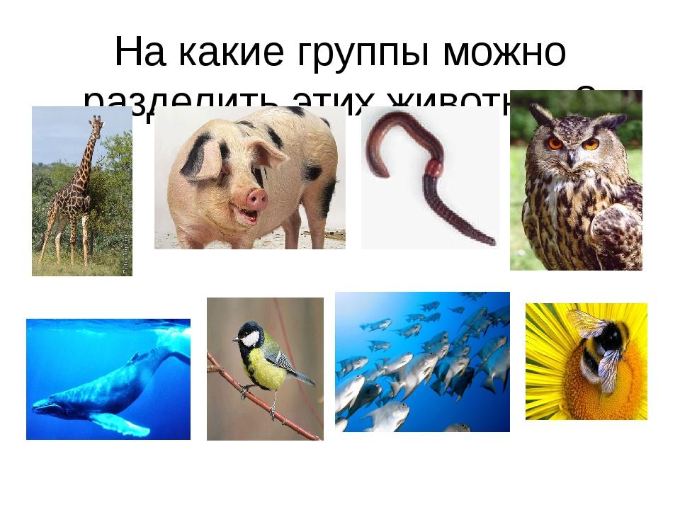 На какие группы можно разделить этих животных? На какие группы можно разделит...