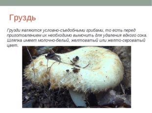 Груздь Грузди являются условно-съедобными грибами, то есть перед приготовлени