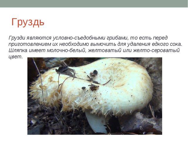 Груздь Грузди являются условно-съедобными грибами, то есть перед приготовлени...