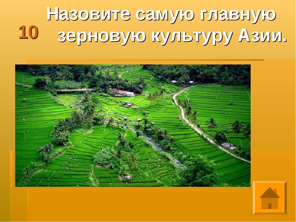 10 Назовите самую главную зерновую культуру Азии.