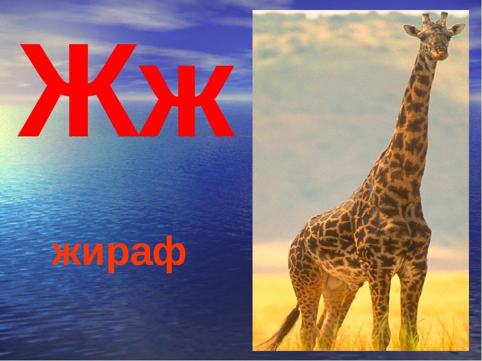 Жж жираф