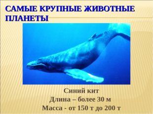 САМЫЕ КРУПНЫЕ ЖИВОТНЫЕ ПЛАНЕТЫ Синий кит Длина – более 30 м Масса - от 150 т