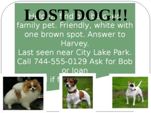 Help us find our beloved family pet. Friendly, white with one brown spot. An