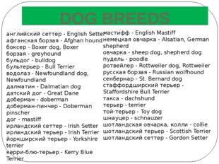 DOG BREEDS английский сеттер - English Setter афганская борзая - Afghan hound