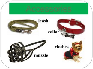Accessories collar leash muzzle clothes