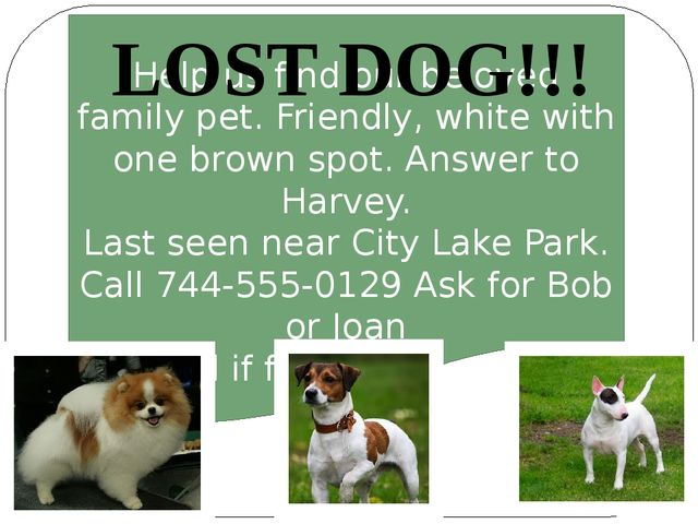 Help us find our beloved family pet. Friendly, white with one brown spot. An...