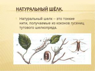 Натуральный шелк – это тонкие нити, получаемые из коконов гусениц тутового ше