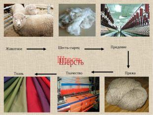 Животное Шесть-сырец Прядение Пряжа Ткачество Ткань