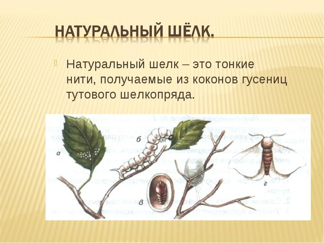Натуральный шелк – это тонкие нити, получаемые из коконов гусениц тутового ше...