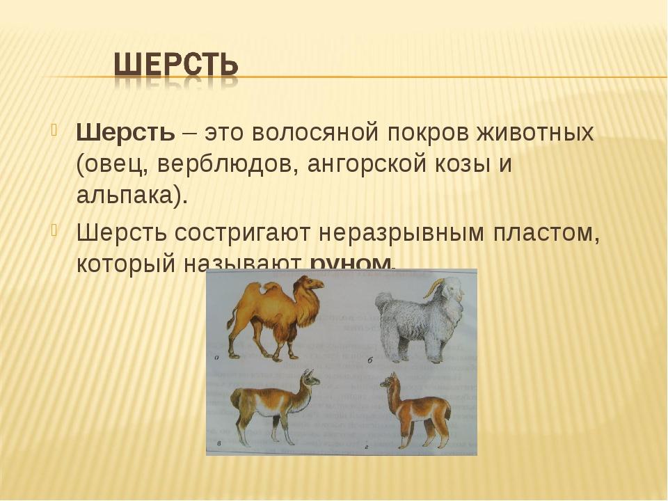Шерсть – это волосяной покров животных (овец, верблюдов, ангорской козы и аль...