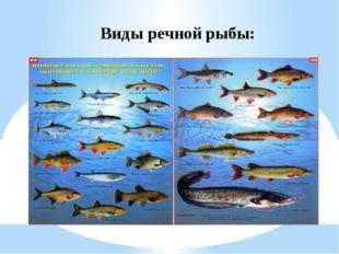 Виды речной рыбы: