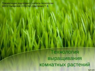 Технология выращивания комнатных растений Презентацию подготовил: учитель тех