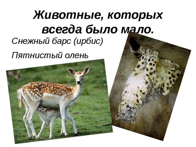 Животные, которых всегда было мало. Снежный барс (ирбис) Пятнистый олень