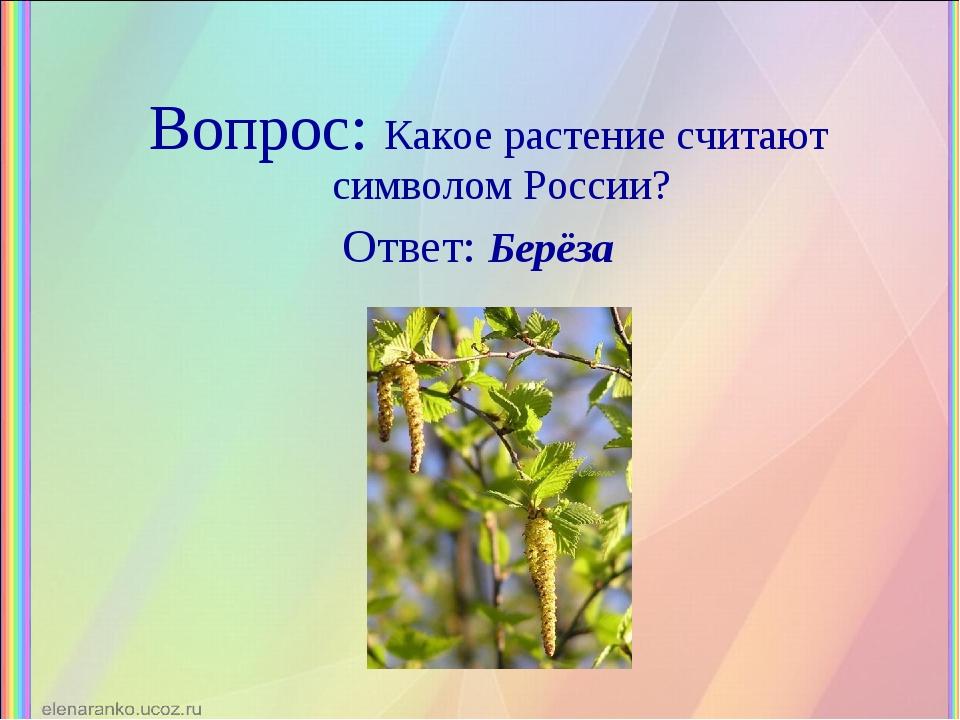 Вопрос: Какое растение считают символом России? Ответ: Берёза