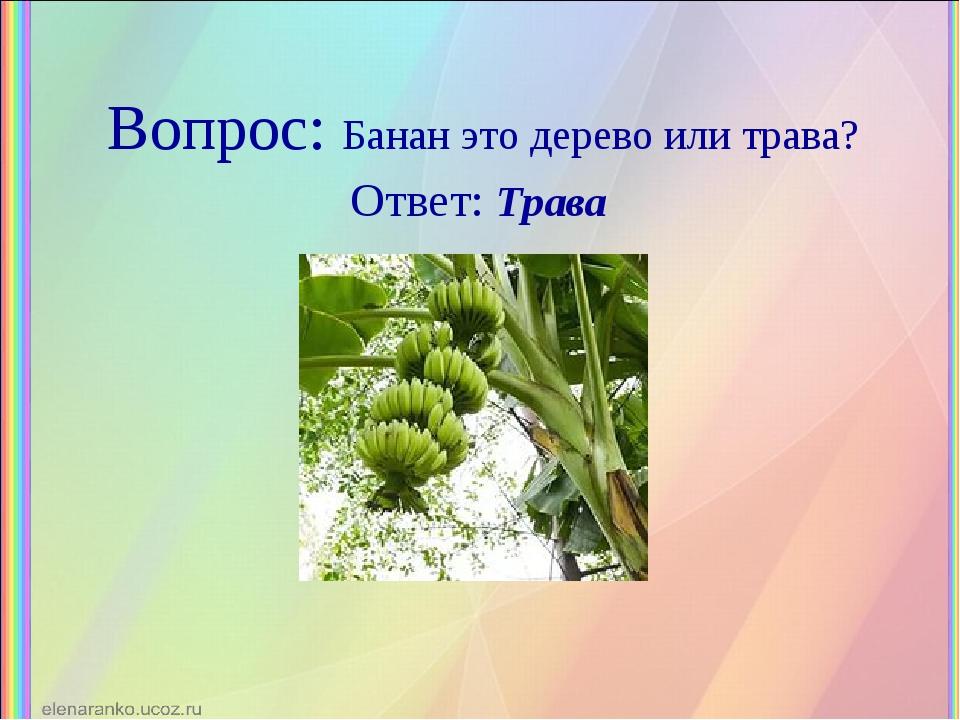 Вопрос: Банан это дерево или трава? Ответ: Трава