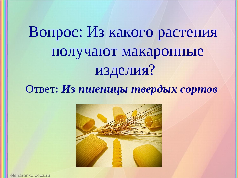 Вопрос: Из какого растения получают макаронные изделия? Ответ: Из пшеницы тве...