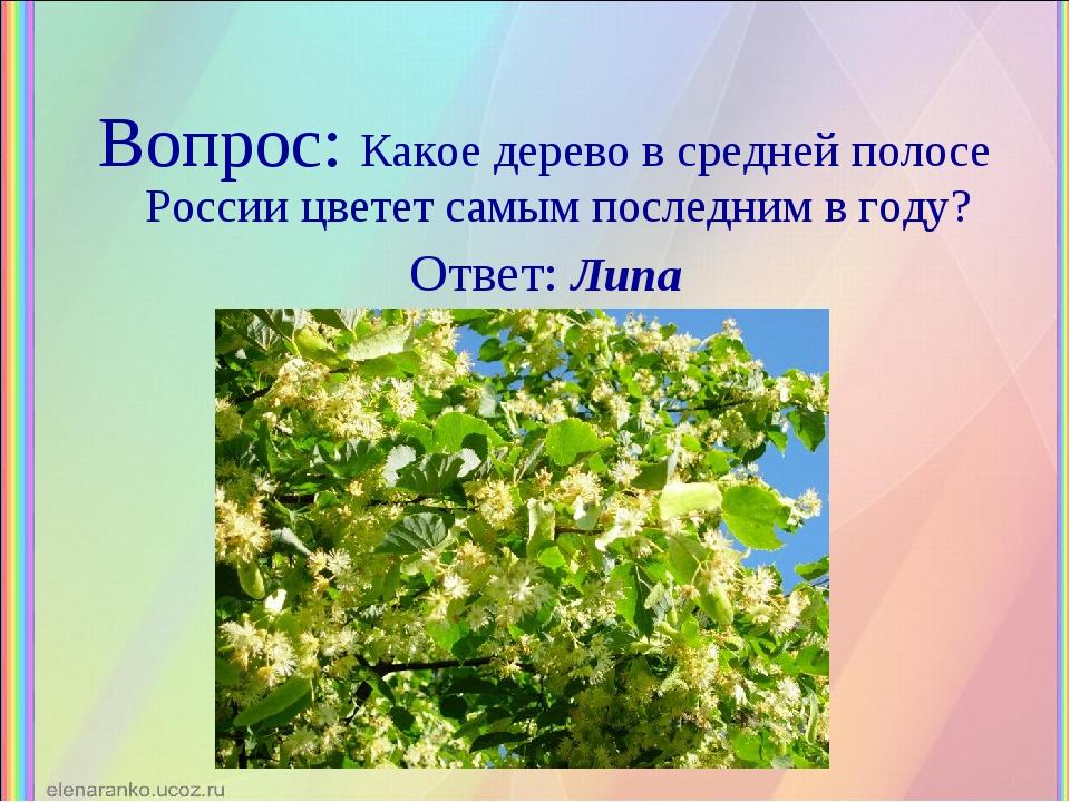 Вопрос: Какое дерево в средней полосе России цветет самым последним в году? О...