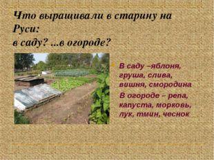 Что выращивали в старину на Руси: в саду? ...в огороде? В саду –яблоня, груша