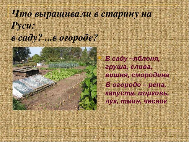 Что выращивали в старину на Руси: в саду? ...в огороде? В саду –яблоня, груша...