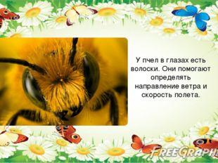 У пчел в глазах есть волоски. Они помогают определять направление ветра и ск