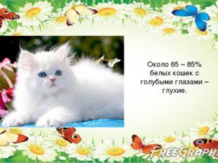Около 65 – 85% белых кошек с голубыми глазами – глухие.