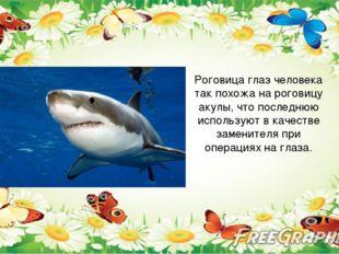 Роговица глаз человека так похожа на роговицу акулы, что последнюю использую