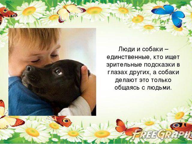 Люди и собаки – единственные, кто ищет зрительные подсказки в глазах других,...