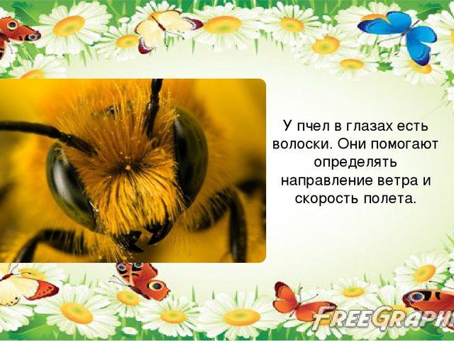 У пчел в глазах есть волоски. Они помогают определять направление ветра и ск...