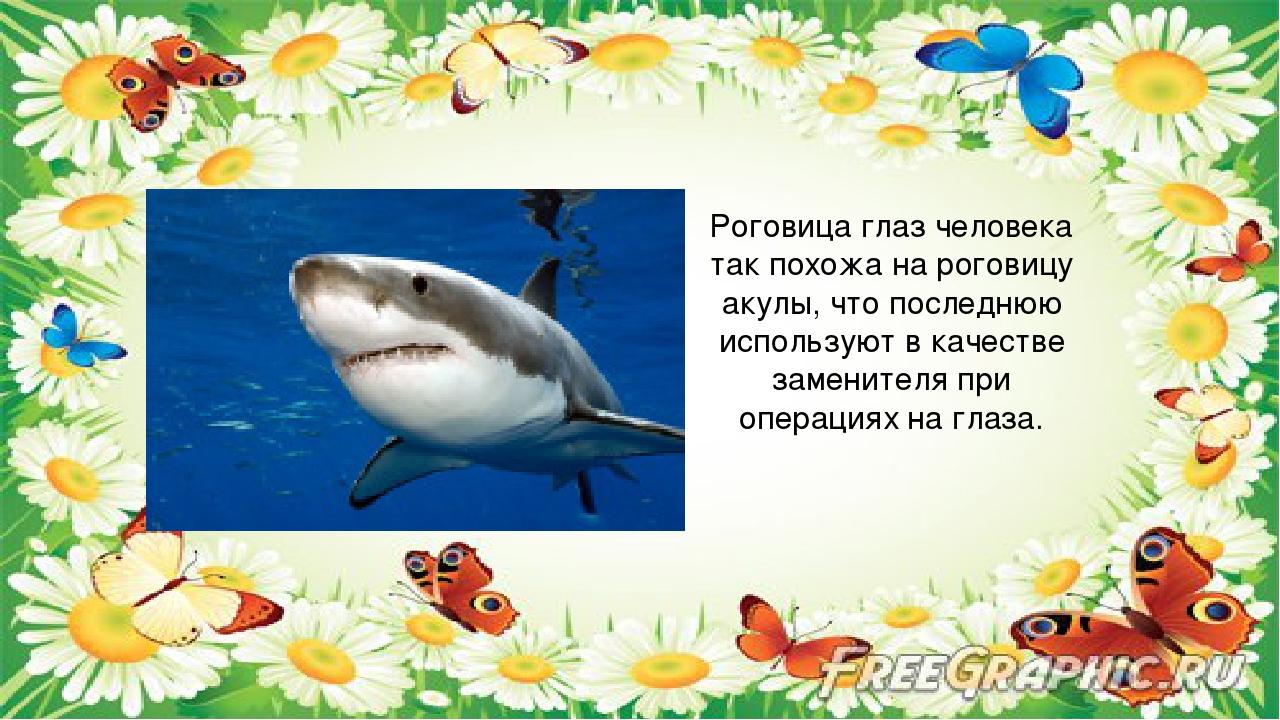 Роговица глаз человека так похожа на роговицу акулы, что последнюю использую...