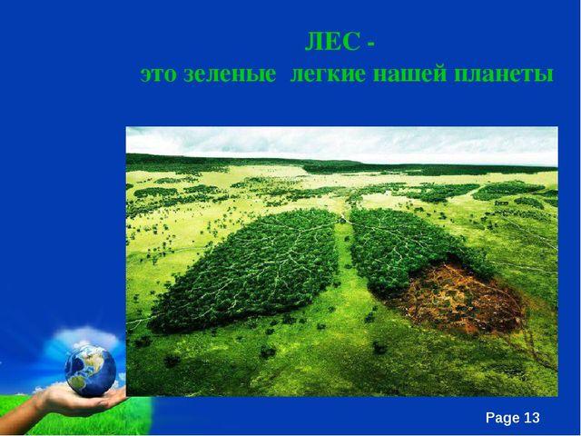 ЛЕС - это зеленые легкие нашей планеты Page *