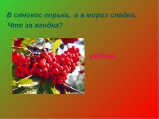 В сенокос горька, а в мороз сладка, Что за ягодка? рябина