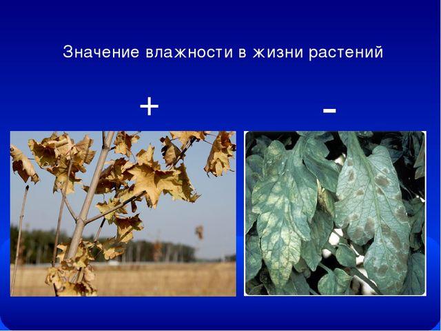 Значение влажности в жизни растений + -