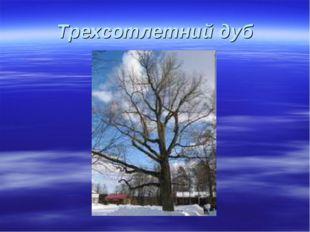 Трехсотлетний дуб