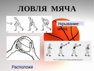 ЛОВЛЯ МЯЧА Укрывание мяча Расположение рук