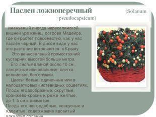 Паслен ложноперечный (Solanum pseudocapsicum) именуемый иногда иерусалимской