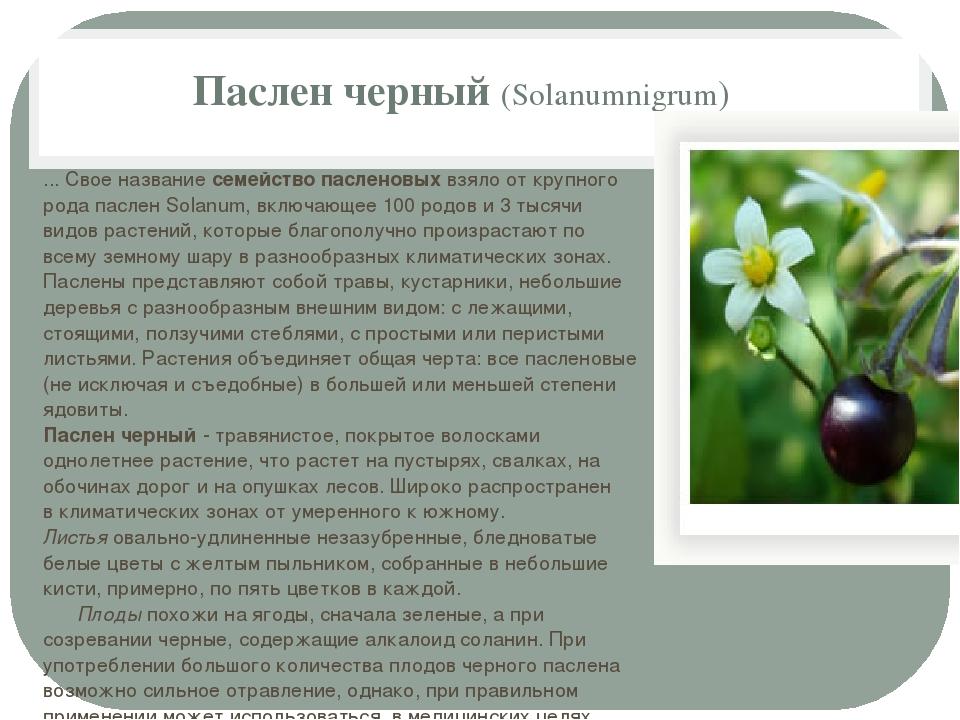 Паслен черный (Solanumnigrum) ... Свое название семейство пасленовых взяло от...