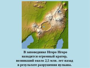В заповеднике Нгоро Нгоро находится огромный кратер, возникший около 2,5 млн