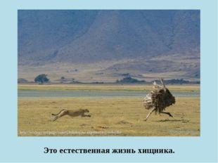 Это естественная жизнь хищника.