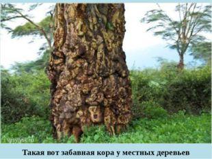 Такая вот забавная кора у местных деревьев