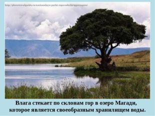 Влага стекает по склонам гор в озеро Магади, которое является своеобразным х