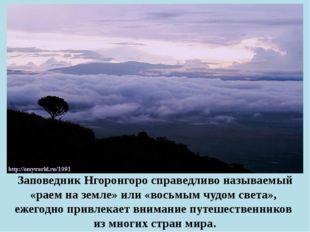Заповедник Нгоронгоро справедливо называемый «раем на земле» или «восьмым чуд