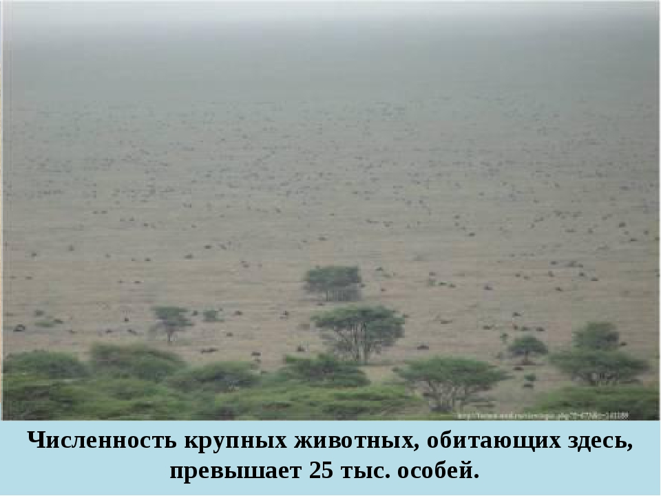 Численность крупных животных, обитающих здесь, превышает 25 тыс. особей.